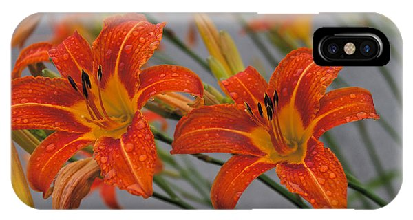 IPhone Case featuring the photograph Day Lilly by William Norton