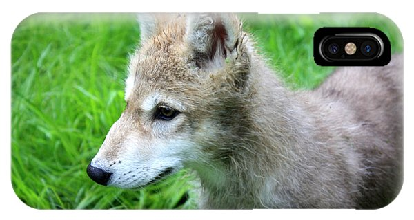 Gray Wolf Pup IPhone Case