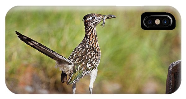 Greater Roadrunner iPhone Case - Greater Roadrunner (geococcyx by Larry Ditto