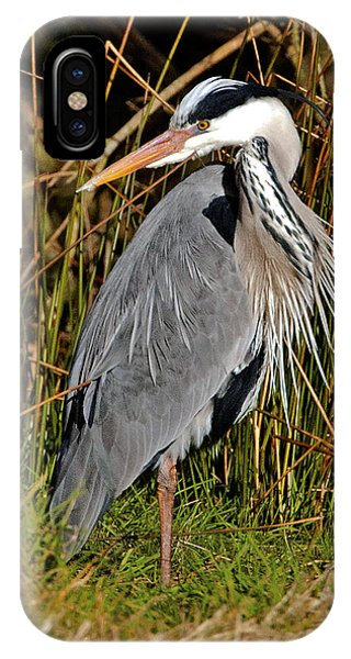 Grey Heron IPhone Case