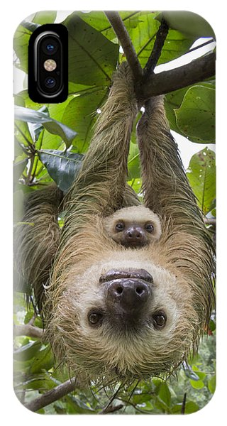 Behaviour iPhone Case - Hoffmanns Two-toed Sloth And Old Baby by Suzi Eszterhas