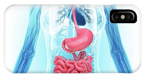 Esophagus iPhone Case - Human Digestive System by Pixologicstudio