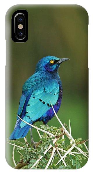 Starlings iPhone Case - Kenya, Lake Nakuru National Park by Jaynes Gallery