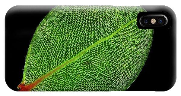 Moss Leaf Phone Case by John Durham