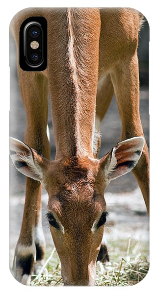 Persian Gazelle IPhone Case