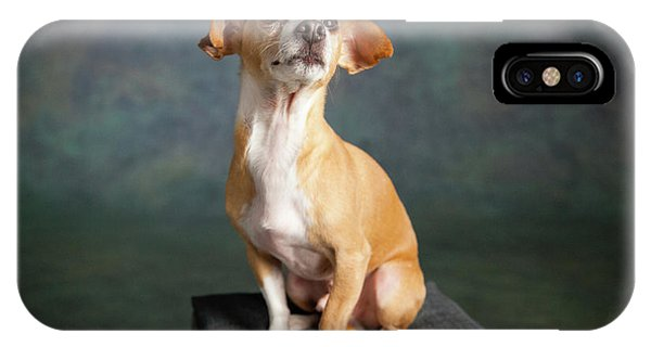 Chihuahua iPhone Case - Portrait Of A Chihauhua Mix Dog by Animal Images