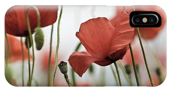 Blooming iPhone Case - Red Poppy Flowers by Nailia Schwarz