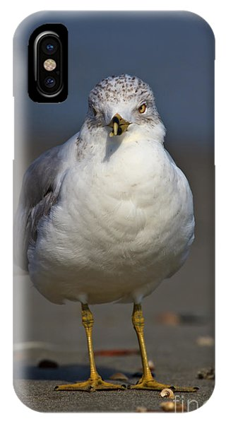 Seagull Vi IPhone Case