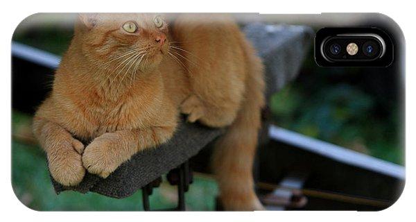 5-toe'd Orange Cat Of The Marina IPhone Case