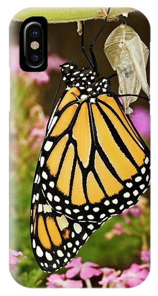 Chrysalis iPhone Case - Usa, Texas, Hill Country by Jaynes Gallery