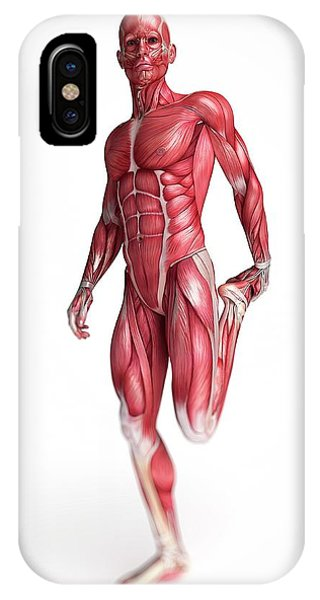 Human Muscular System Phone Case by Sebastian Kaulitzki