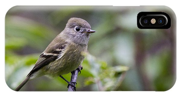 Alder Flycatcher IPhone Case