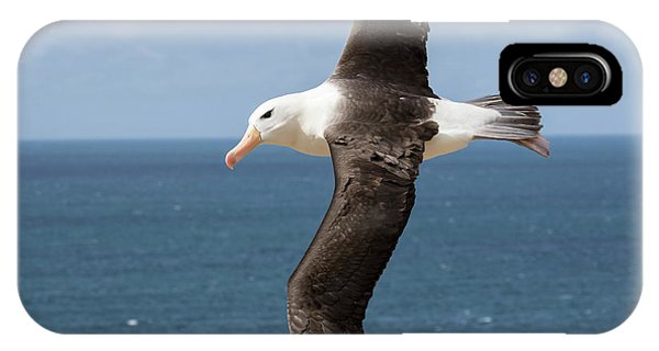 Albatross iPhone Case - Black-browed Albatross (thalassarche by Martin Zwick