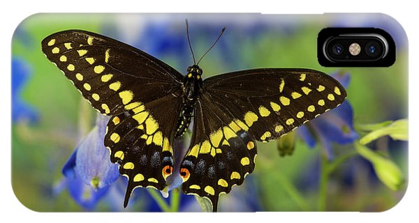 Black Swallowtail Butterfly, Papilio Phone Case by Darrell Gulin