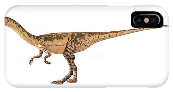 Coelophysis Dinosaur Model Phone Case by Natural History Museum, London/science Photo Library