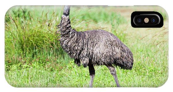 Emu (dromaius Novaehollandiae IPhone Case