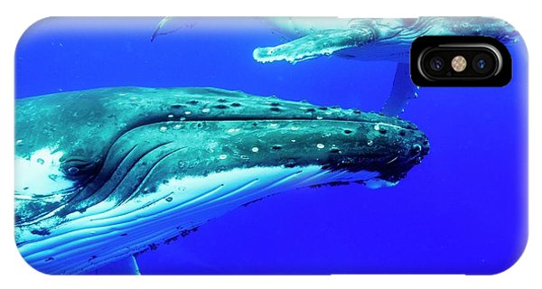 Sea Floor iPhone Case - Humpback Whale Mother And Calf by Christopher Swann/science Photo Library