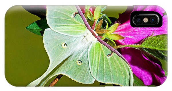 Pterygota iPhone Case - Luna Moth by Millard H. Sharp