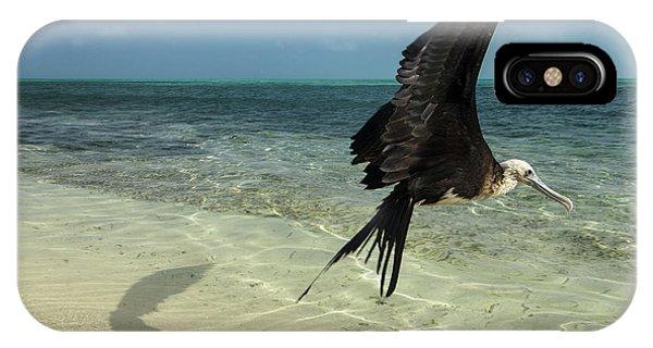 Belize iPhone Case - Magnificent Frigatebird (fregata by Pete Oxford