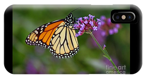 Monarch Butterfly In Garden IPhone Case