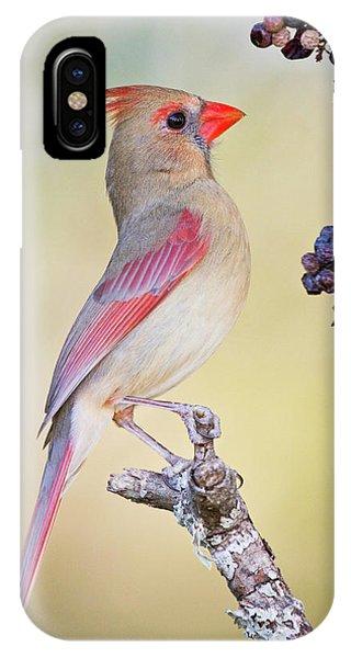 Northern Cardinal (cardinalis Cardinalis Phone Case by Larry Ditto