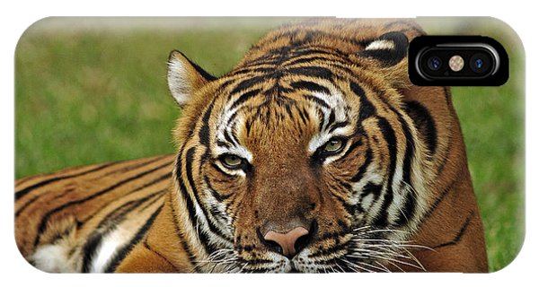 Royal Bengal Tiger IPhone Case