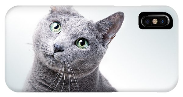 Cats iPhone Case - Russian Blue Cat by Nailia Schwarz