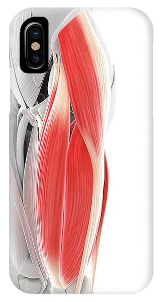 Thigh Muscles Phone Case by Sciepro/science Photo Library