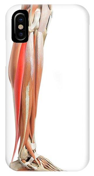 Leg Muscles Phone Case by Sebastian Kaulitzki/science Photo Library