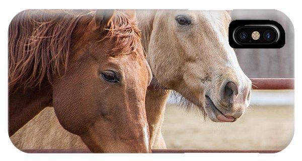 6820 Horses Portrait Phone Case by Deidre Elzer-Lento