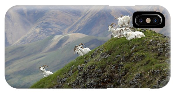 Alaskan Dall Dahl-sheep Image Art  IPhone Case