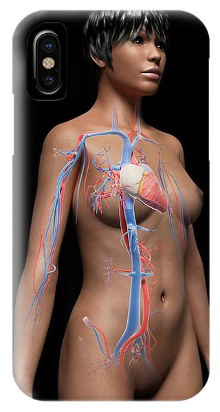 Female Cardiovascular System Phone Case by Sebastian Kaulitzki