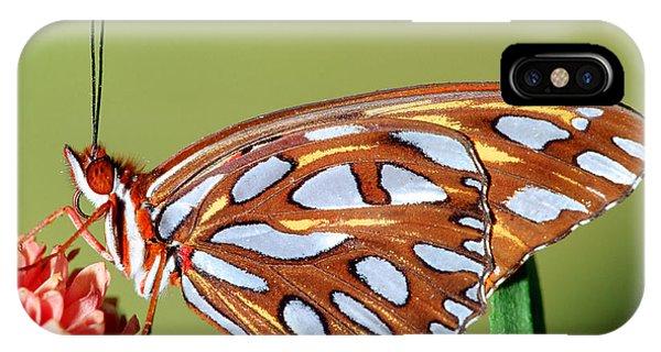 Agraulis Vanillae iPhone Case - Gulf Fritillary Butterfly by Millard H Sharp