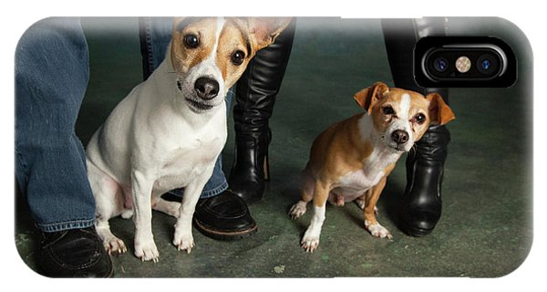 Chihuahua iPhone Case - Portrait Of A Jack Russell Terrier Dog by Animal Images