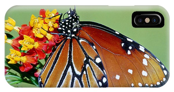 Pterygota iPhone Case - Queen Butterfly by Millard H. Sharp