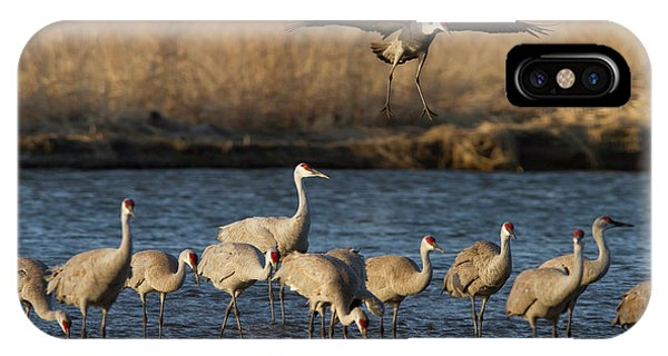 Sandhill Cranes Grus Canadensis Phone Case By William Sutton