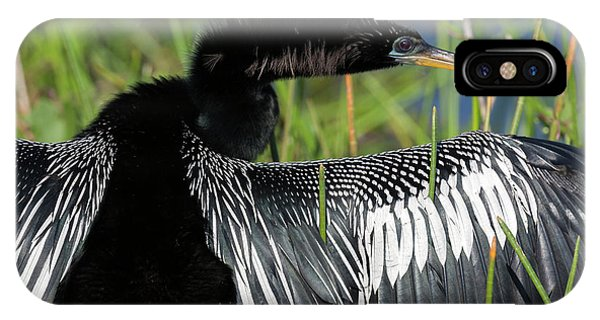 Anhinga iPhone Case - Usa, Florida, Everglades National Park by Jaynes Gallery