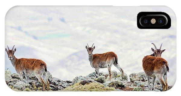 East Africa iPhone Case - Walia Ibex (capra Walie by Martin Zwick