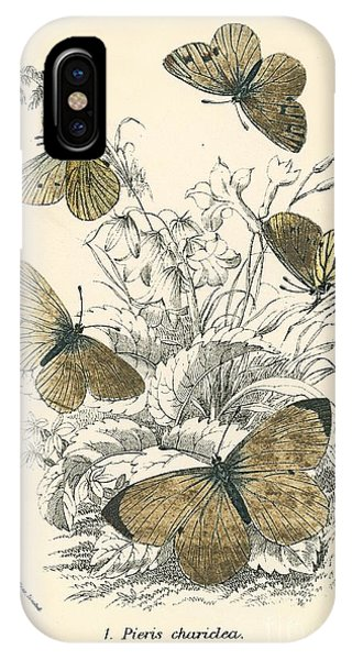Moth iPhone Case - Butterflies by English School