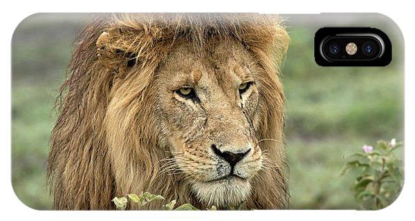 Lion iPhone Case - Africa, Tanzania, Serengeti by Charles Sleicher