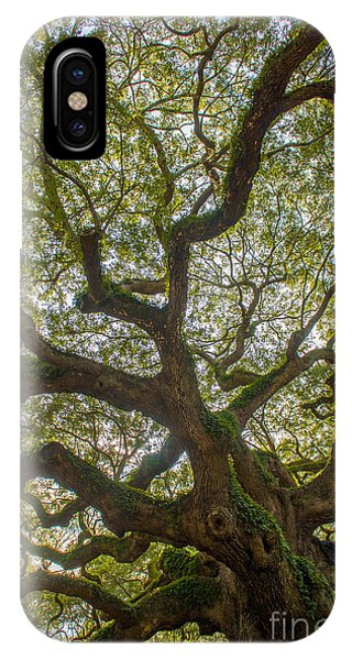 Island Angel Oak Tree IPhone Case