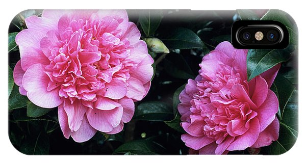 Cultivar iPhone Case - Camellia Flowers by Adrian Thomas/science Photo Library