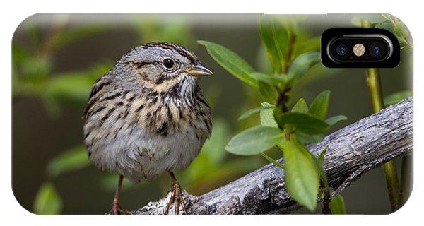 Lincolns Sparrow IPhone Case
