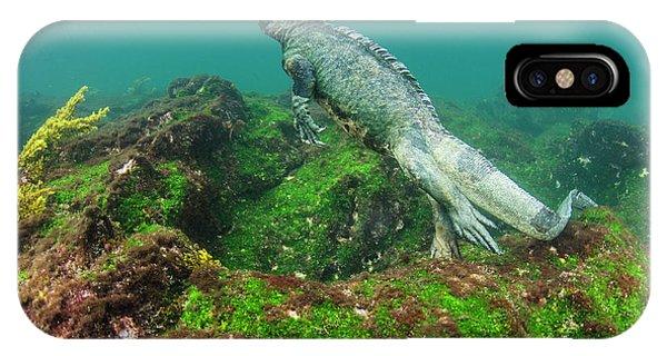 Alga iPhone X Case - Marine Iguana (amblyrhynchus Cristatus by Pete Oxford