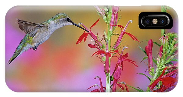 Scarlet iPhone Case - Ruby-throated Hummingbird (archilochus by Richard and Susan Day