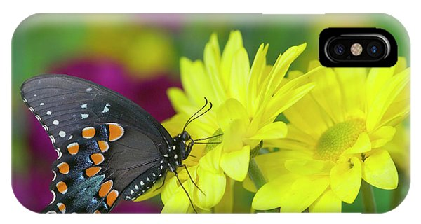 Spicebush Swallowtail, Papilio Troilus Phone Case by Darrell Gulin