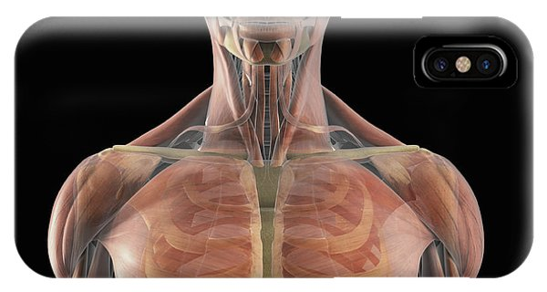 Pectoral Muscle iPhone Cases (Page #2 of 3) | Fine Art America