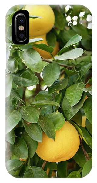 Grapefruit iPhone Case - Tucson, Arizona, United States by Julien Mcroberts