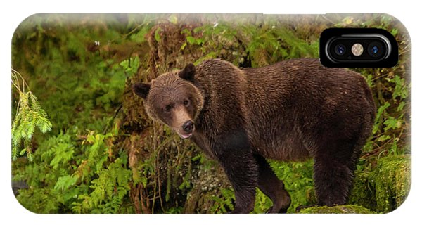Bear Creek iPhone Case - Usa, Alaska, Tongass National Forest by Jaynes Gallery
