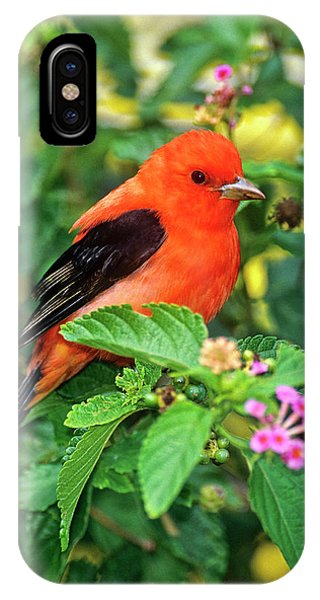 Migratory Birds iPhone Case - Usa, Texas, South Padre Island by Jaynes Gallery